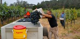 harvest-2014-begins_DSC_1133-lg