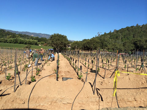 farming_Planting5